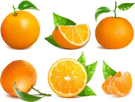 vector orange fruit leaves  vector