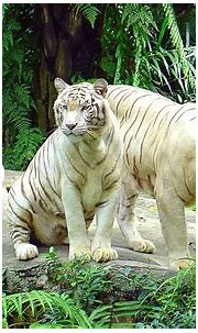 Zoo Animal Pictures - Pets Cute and Docile