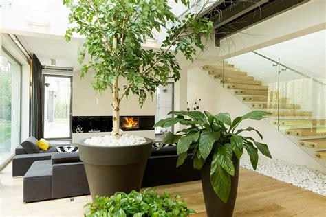 Piante Per Interno Casa Design Verde Interno Verona Con Progettazione E