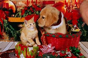 Tag For Christmas puppies and kittens wallpaper - Litle Pups