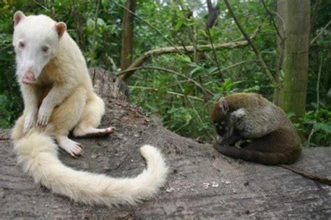list   rare albino animals pics  world stuff