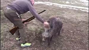 You Tube Chasse : top 5 attaque des sanglier sauvages chasse sanglier youtube ~ Medecine-chirurgie-esthetiques.com Avis de Voitures