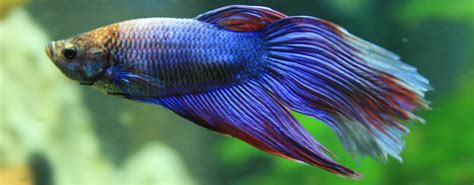 beginners guide  tropical fish identification