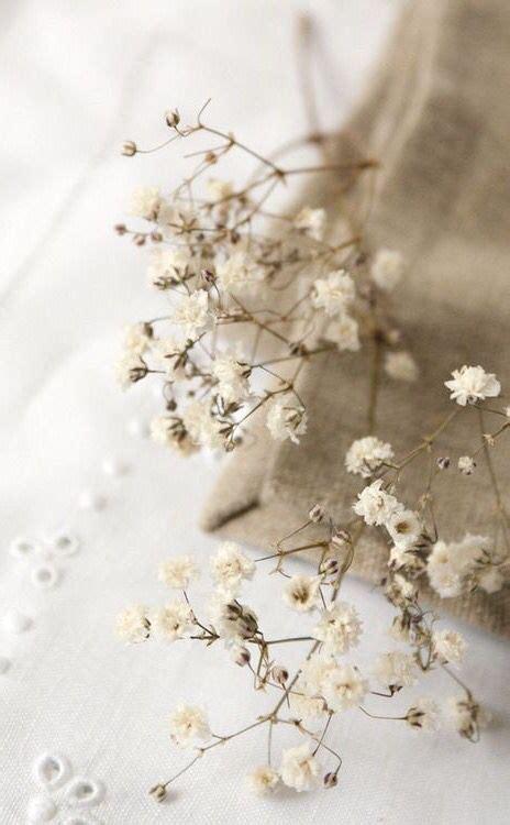 cream beige beige aesthetic cream aesthetic white