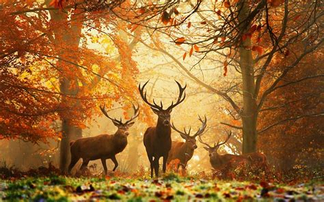 Animal Deer Wallpaper - animals deer images wallpaper 1920x1200 cool pc wallpapers