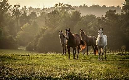 Horses Wild Wallpapers