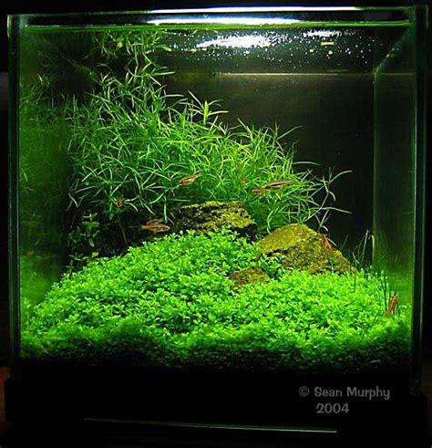 Aquascaping Planted Tank by Basic Aquascaping Principles And Technique Aquascape