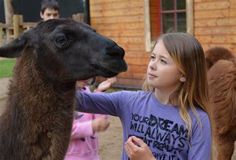 Rakšu kamieļu parka apmeklējums - Dāvanu Komplekti