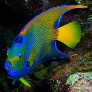 1441 best MARINE LIFE....FISH, GATORS, ETC. images on ...
