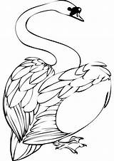 Swan Coloring Pages Clipart Walk Animal Clipground Walking Vector sketch template