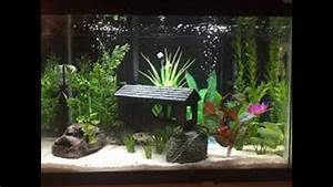 Natural Fish Tank Decoration Ideas - YouTube