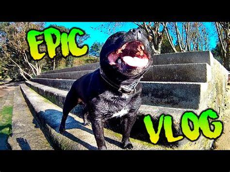 epic vlog nuevo perrito  thayson  tula makiman