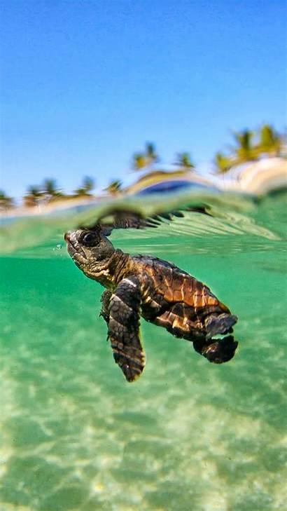 Iphone Ocean Turtle Wallpapers Jour Lagon Underwater