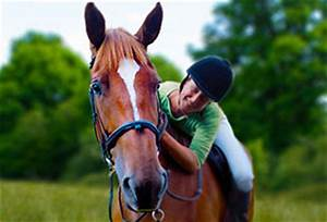 how to choose horse insurance horse veteran and rider insurance petplan equine