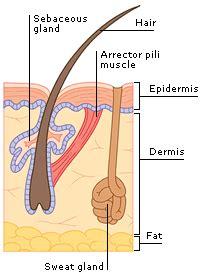 medical encyclopedia skin hair and nail disorders aviva