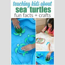 25+ Best Ideas About Turtle Facts For Kids On Pinterest