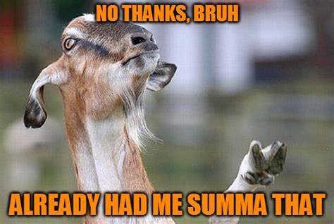 Billy Goat Meme - goat bro s imgflip