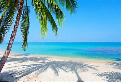 Palm Beach Tree Ipad Wallpapertag Windows
