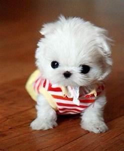White small dog / white puppy | Precious loving animals ...