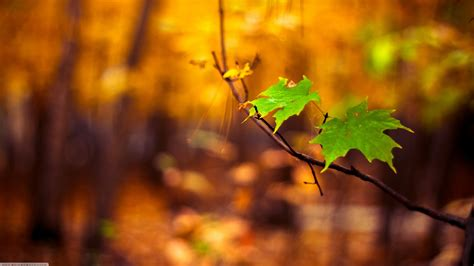 nature macro leaves blurred wallpapers hd desktop