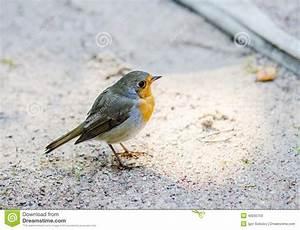 Vogel Mit Roter Brust : zitronenzeisig kleiner vogel mit einer gelben brust stockfoto bild 40005753 ~ Eleganceandgraceweddings.com Haus und Dekorationen