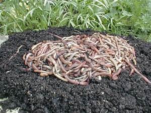 Schnellkomposter Selber Bauen : kompost anlegen schnellkomposter hochbeet selbst anlegen anleitung von obi komposter kompost ~ Frokenaadalensverden.com Haus und Dekorationen