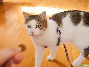 Katze Im Haus Halten : eine katze an die laufleine gew hnen wikihow ~ Lizthompson.info Haus und Dekorationen