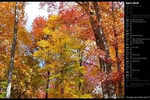 Fall, Trees, Background, U00b7, U2460, Wallpapertag