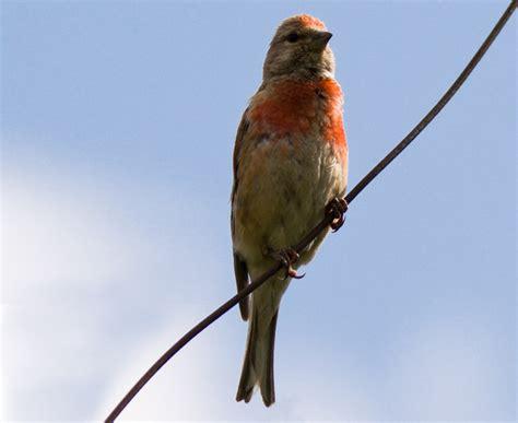 bird quizzes finches