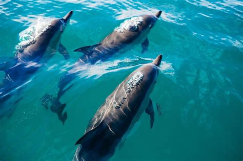 Newport Boat Tours by Best Newport Water Tours Whales And Dolphins