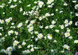 Welche Blumen Kann Man Essen : welche blumen eignen sich f r eine beerdigung ~ Watch28wear.com Haus und Dekorationen