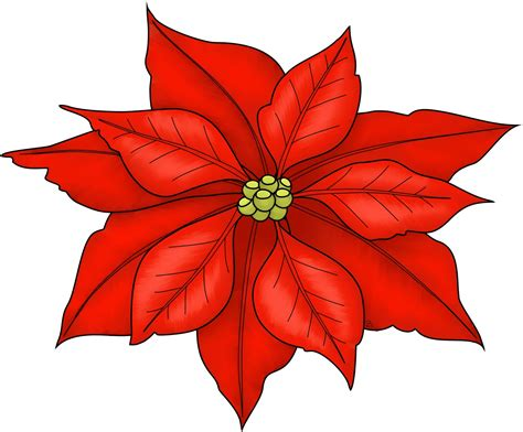 poinsettias pictures beccy s place poinsettia freebie