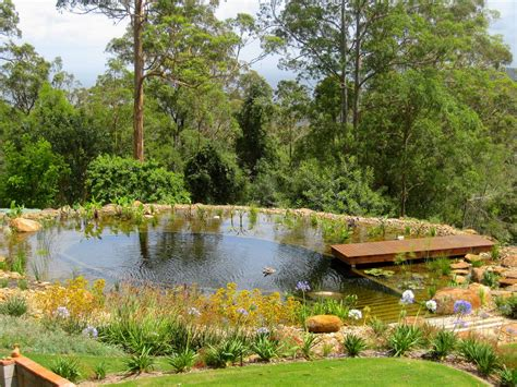 water features natural swimming pools