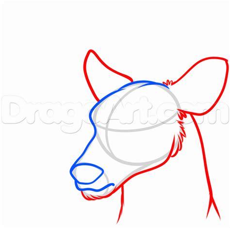 draw  deer head step  sketching