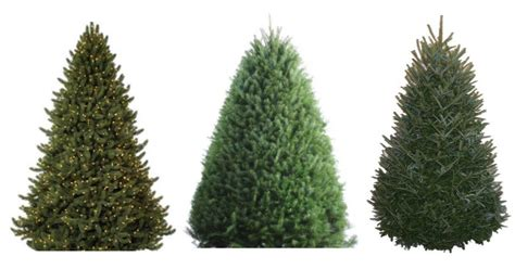 today only 25 off fresh cut trees prices start at 14 98