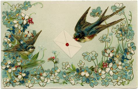 vintage birds  flowers postcard