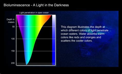 Why Does Darkness Affect The Light Independent Reactions Of Photosynthesis by Bioluminescence A Light In The Darkness