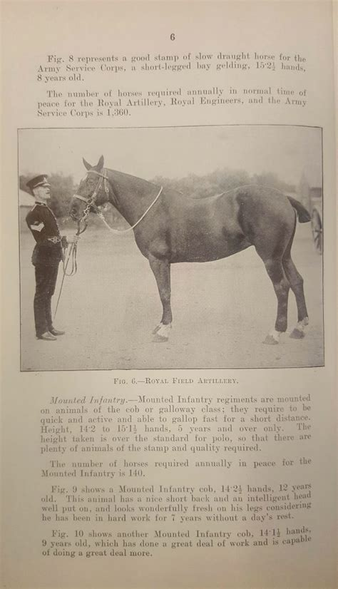 horses horse war office wiltshire territorial army 1912 1915