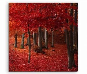 Rote Blätter Baum : leinwandbild herbsbild rote bl tter vom baum im wald ebay ~ Michelbontemps.com Haus und Dekorationen