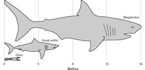 Great White Shark Diagram by Shark Mathematics Passy S World Of Mathematics