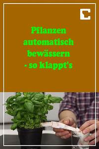 Pflanzen Bewässern Urlaub : pflanzen automatisch bew ssern mit dieser konstruktion klappt 39 s pflanzen urlaub planen und ~ Watch28wear.com Haus und Dekorationen