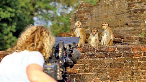 sri lanka tourisms  sri lanka film wins viral brand