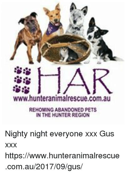 Nighty Night Meme - har wwwhunteranimalrescuecomau rehoming abandoned pets in the hunter region nighty night