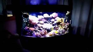 Juwel Trigon 350 : reef tank juwel trigon 350 l 1 youtube ~ Frokenaadalensverden.com Haus und Dekorationen