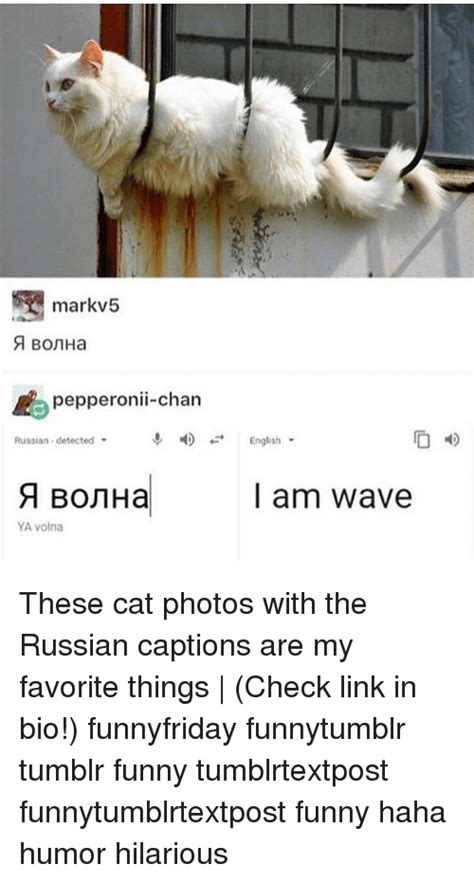 Russian Cat Meme - markv5 pepperonii chan russian detected english l am wave ya volna these cat photos with the