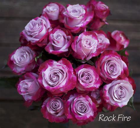 the lavender purple study flirty fleurs the