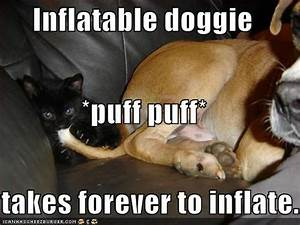Funny Image Gallery: Funny Dog Photos with Humorous Captions
