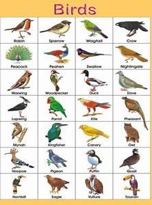 BIRDS.jpg (369×500) | BIRDS LIST NAMES | Pinterest | The o ...
