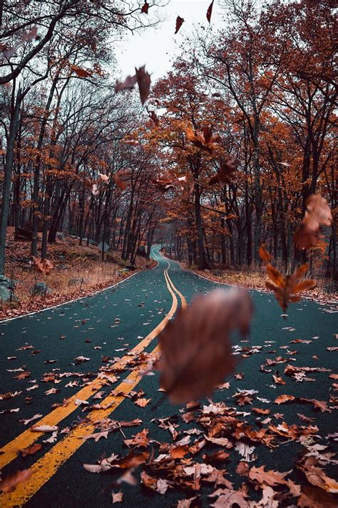 Fall Esthetic Backgrounds by Banshy Untitled By Josh Alvarez Autumn