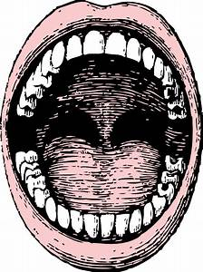 Open Mouth Clip Art At Clker Com
